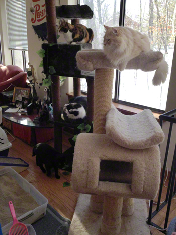 AFter on Cat Trees R Olson