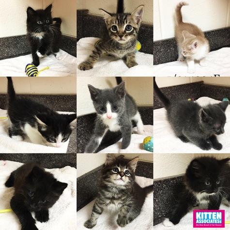 All Kittens 900