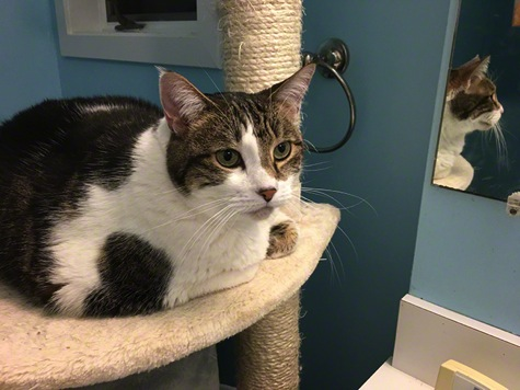 Belle Reflecting R Olson 650