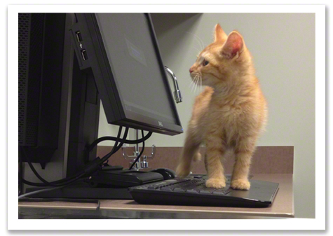 Bert On Computer at Vet R Olson.jpg
