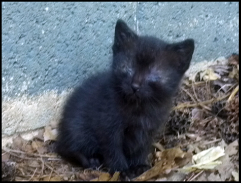 Black Kitten Eyes Closed.jpg