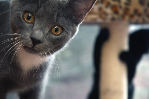 Black kitten photobomb with P R Olson