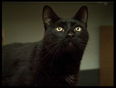 Black kitty copy.jpg