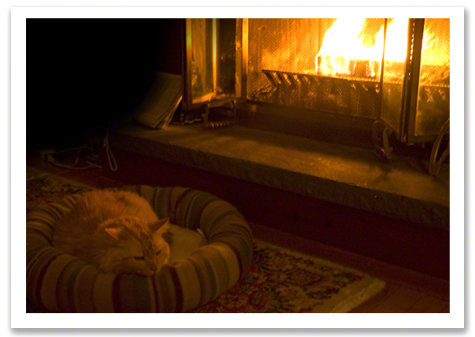 Bob by the Fire R Olson.jpg