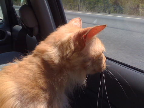 Bob in the car on the way home.jpg