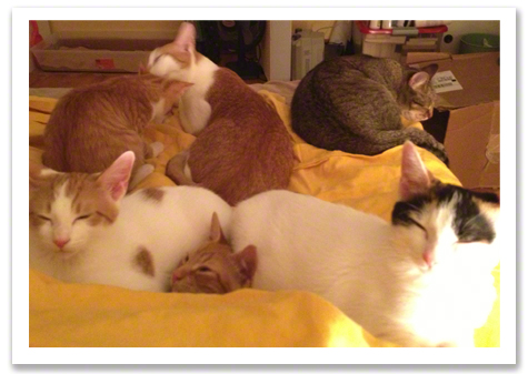 Bunny and the kittens on the bed R olson.jpg