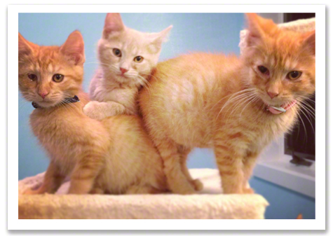 Buttercup with 2 sick kittens R Olson.jpg