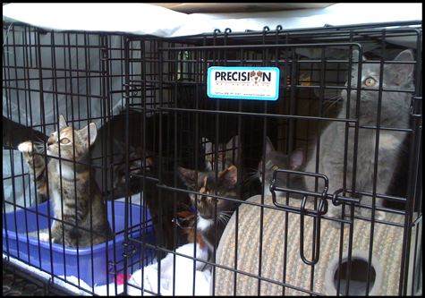 Carload of Kittens.jpg