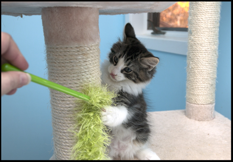 Charly and Green Wand Toy.jpg