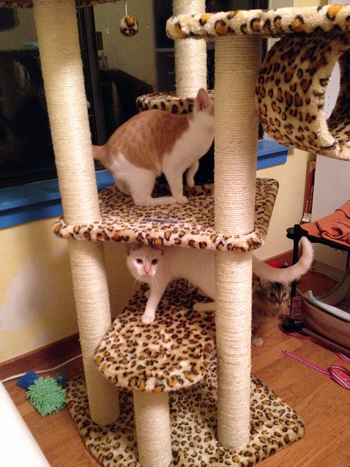 Checkin out Cat Tree.jpg