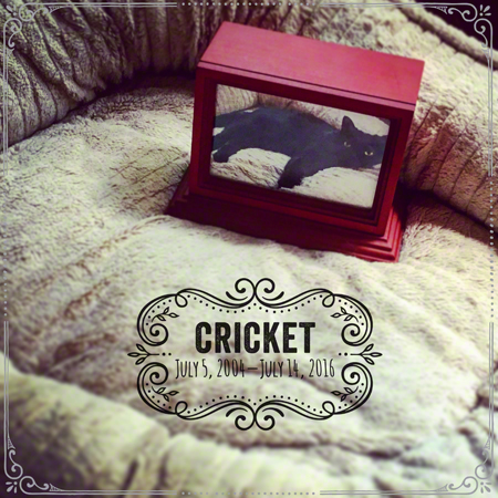 Crickets Urn Insta Version R Olson 450
