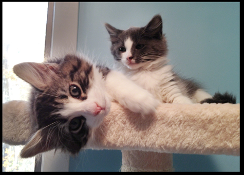 Cuties on Cat Tree copy.jpg