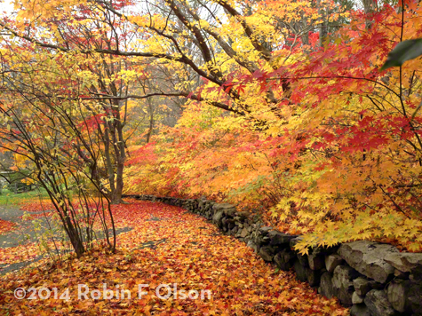 Fall Dream Robin Olson