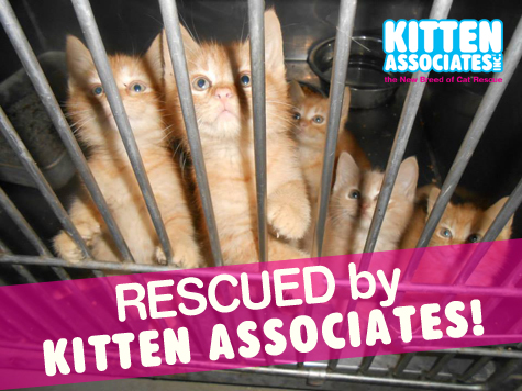 First Look Kittens in Cage_475 REZ.jpg