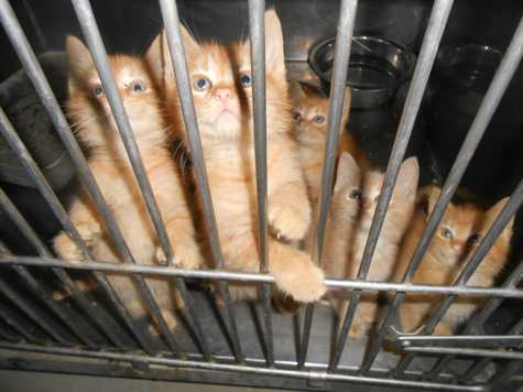 First Look Kittens in Cage_475.jpg