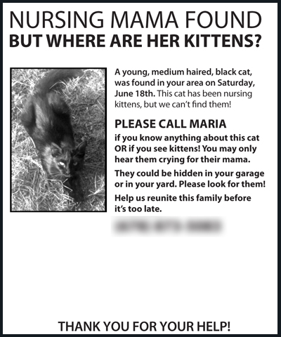 Flyer for Kittens.jpg