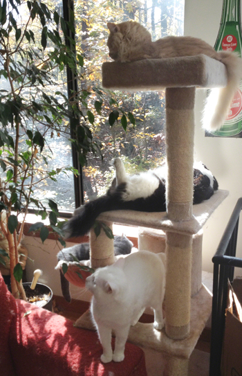 Four Cats on Tree 2012