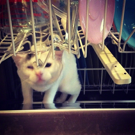 Freya in dishwasher