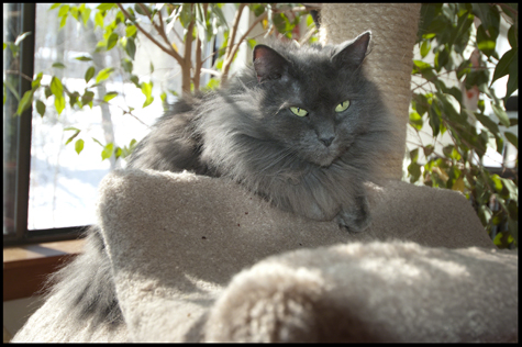 Gracie on the Cat Tree.jpg