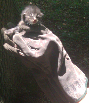 Gray Tabby in Glove.jpg