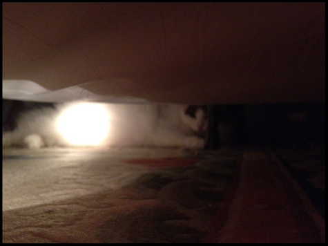 Hiding under the bed.jpg