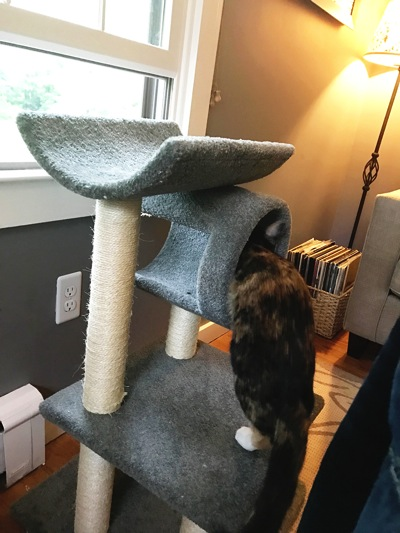Holly cat tree