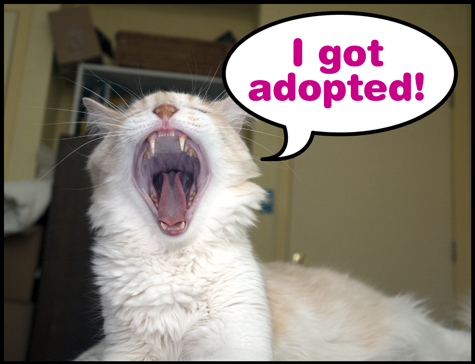 I got Adopted 2011 R.Olson.jpg
