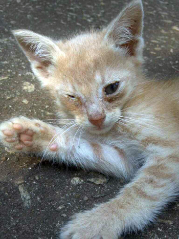 Not On My Watch Emergency Fundraiser For 2 4 Wk Old Kittens Covered In Cat Hair