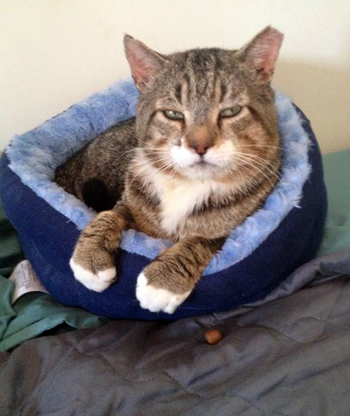In cat bed on weds after scare MG.jpg