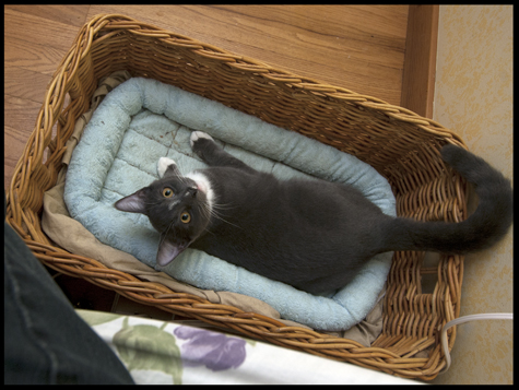Jack in the basket.jpg