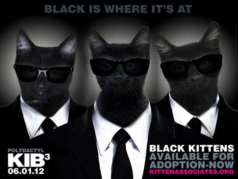 KIB_KittenAssociates_Olson.jpg