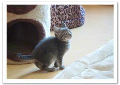 Kitten in new room r olson.jpg