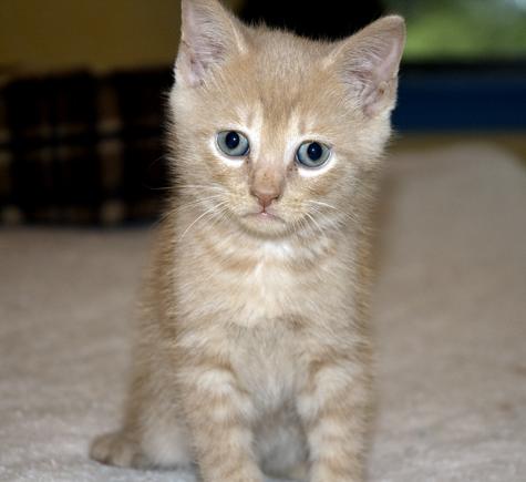 Kitten4_buffboy.jpg