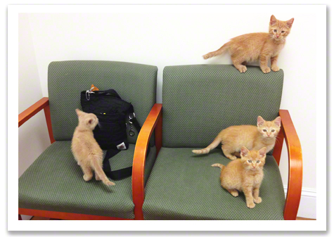 Kittens at Vet Sofa R Olson.jpg