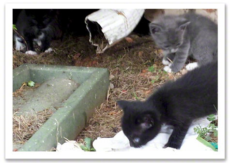 Kittens by downspout.jpg