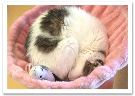 Kitty in pink bed R Olson.jpg