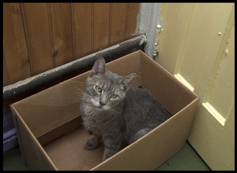 Kitty in the Box.jpg