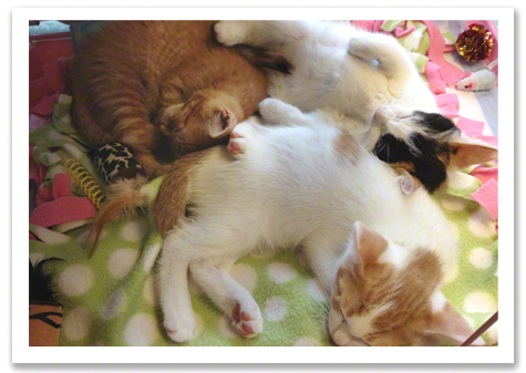 Let Sleeping Kittens R Olson.jpg