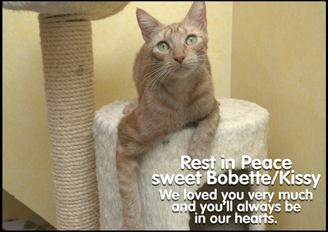 Lovely Bobette RIP copy.jpg