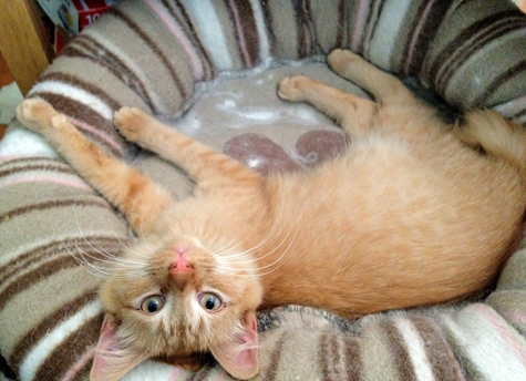 That Special Something: Orange Tabbies  | Covered in Cat Hair