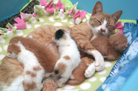 Minne and Family