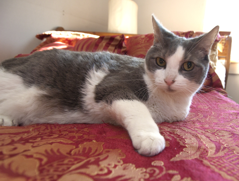 Here's the Story of a Lovely Lady | Covered in Cat Hair