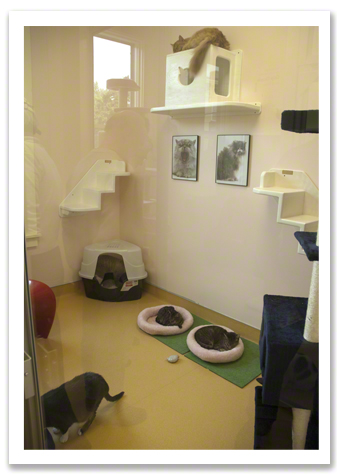 One of the Cat Rooms R Olson.jpg