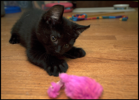 Pink Mousy Toy.jpg