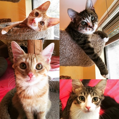 Quad Shot of 4 Kittens