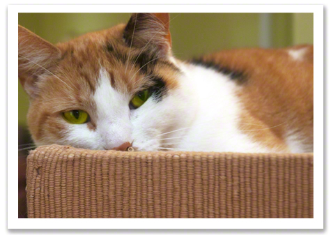Senior Calico Kitty R Olson.jpg