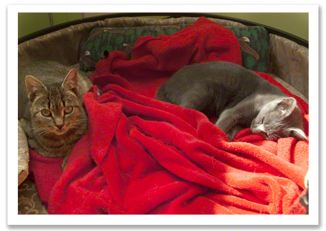 Senior Kitties Slumber R Olson.jpg