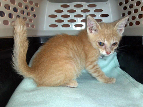all about bengal kittens