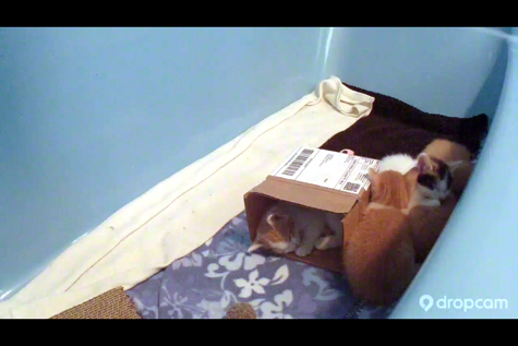 Sleeping in the Box Dropcam.jpg