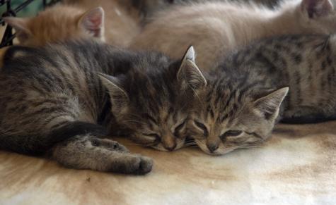 Sleepytime_sm.jpg